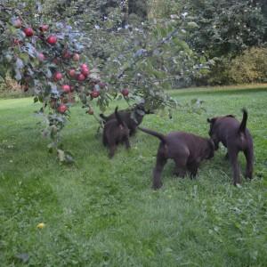 Mot nya mål – äpplen till alla!