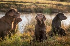 Alebäckens kennelhundar